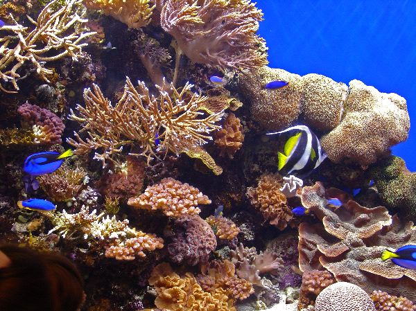 Coral Reef Biome Landscape
