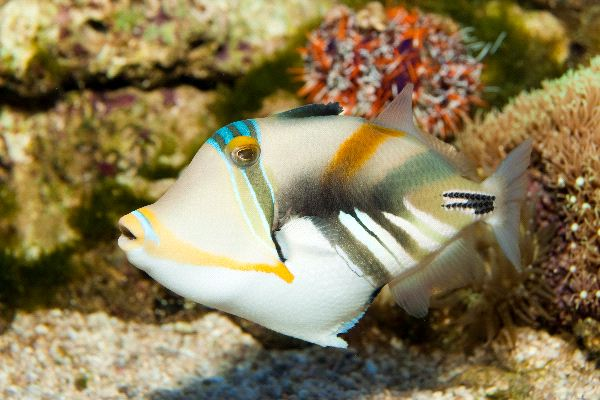 Triggerfish Information