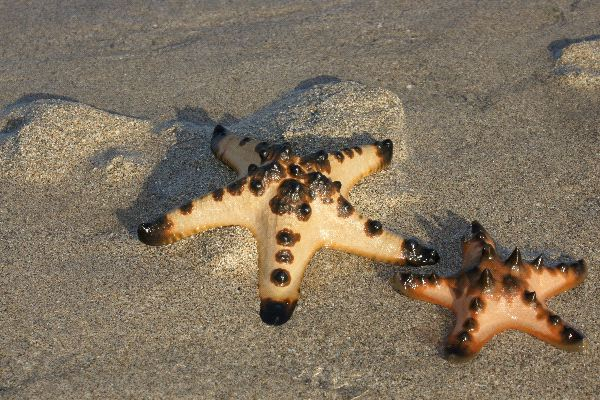 Starfish Information