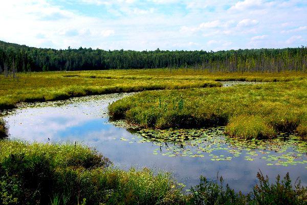 Wetland Biome Landscape