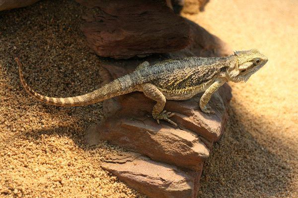 Desert animals with information