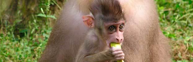 Drill Monkey Infant