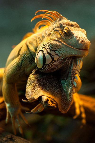 Types of Lizards Species