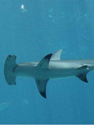 Shark Species-image