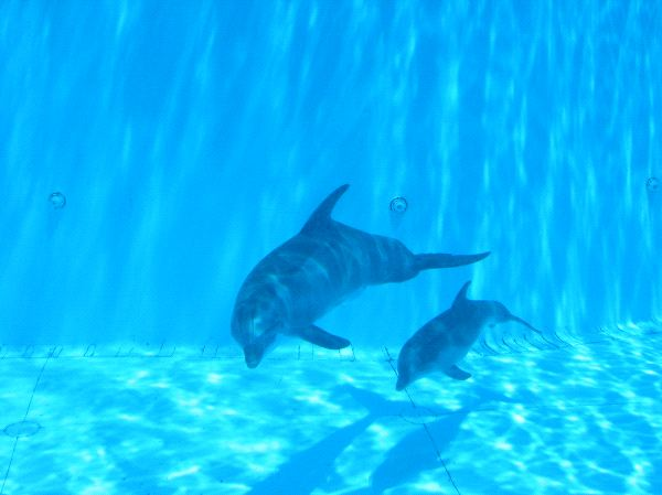 Dolphin Breeding