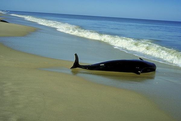 Dead whale on a coast