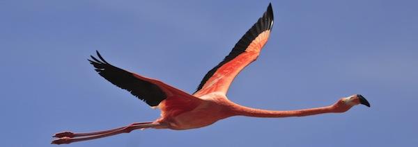 flamingo_feature