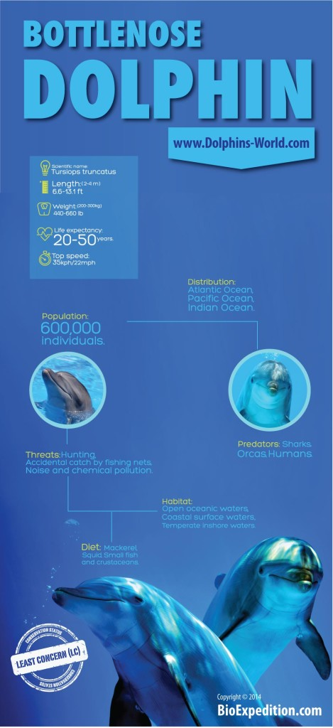 Bottlenose Dolphin Infographic - Animal Facts and Information - photo#17