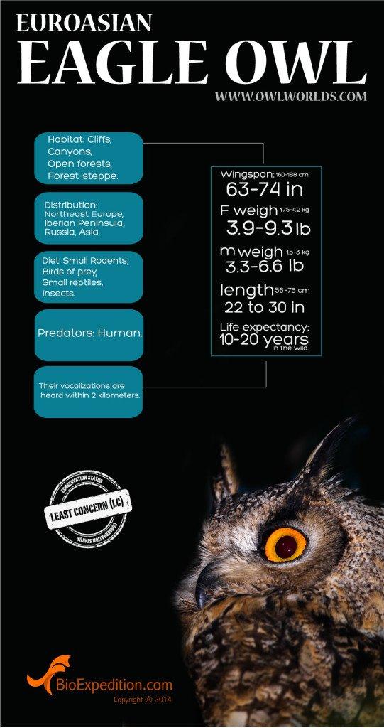 EUROASIAN_EAGLE_OWL_infographic
