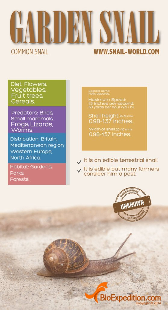 garden_snail_infographic