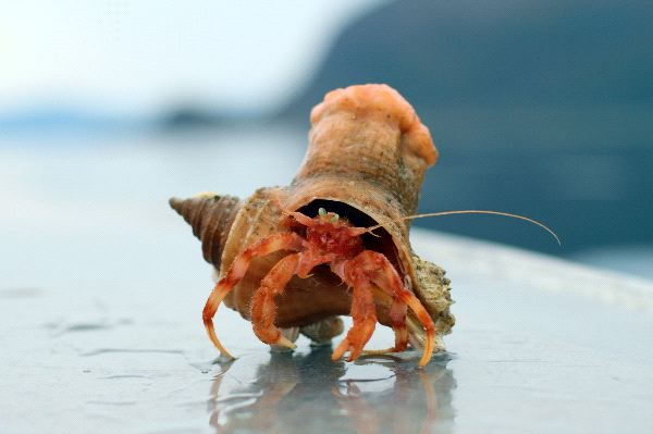 Hermit Crab Facts