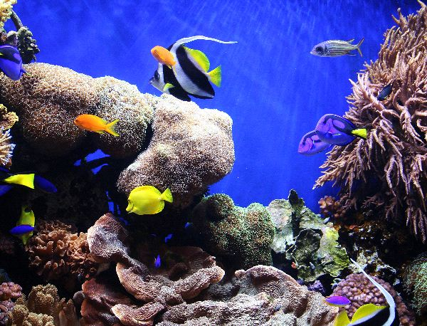 Coral Reef Biome Information