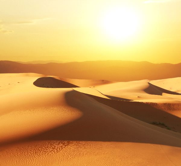 Desert Biome Information