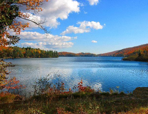Freshwater Biome Landscape