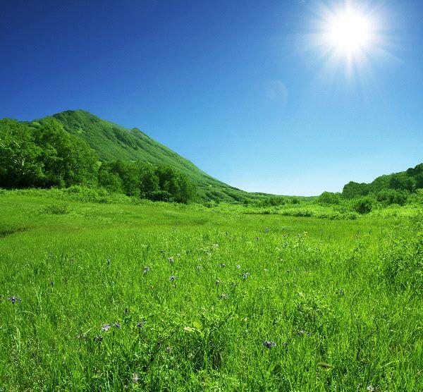 Grassland Biome Landscape