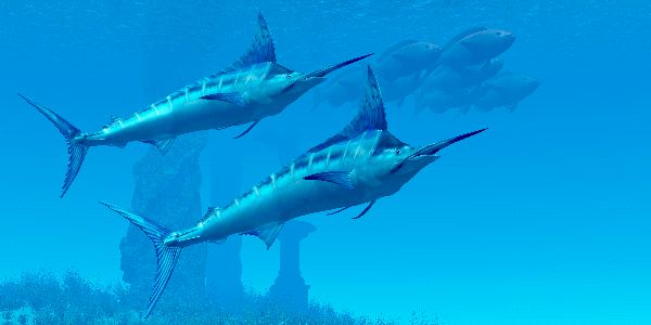Blue Marlin Facts and Information