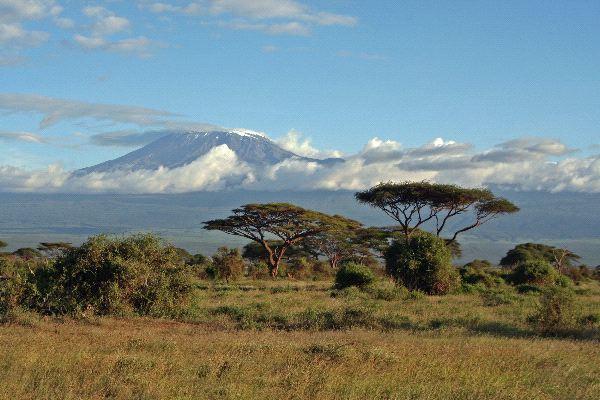 Savanna Biome Animal Facts And Information