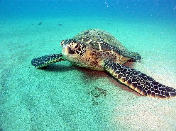 Sea Turtles Distribution