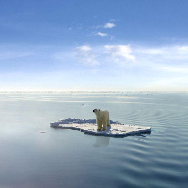Polar Bear Endangered