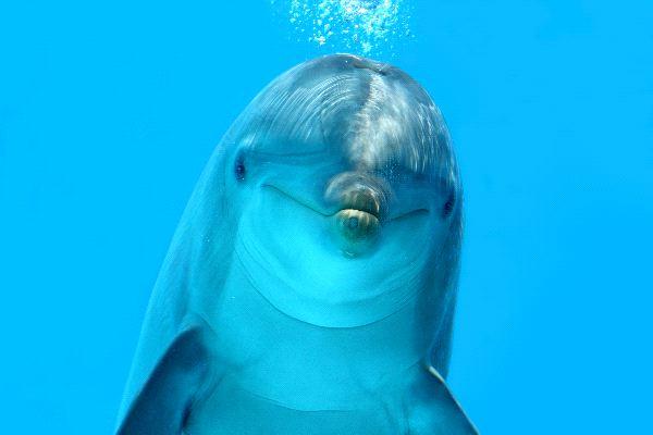 Bottlenose Dolphin Look
