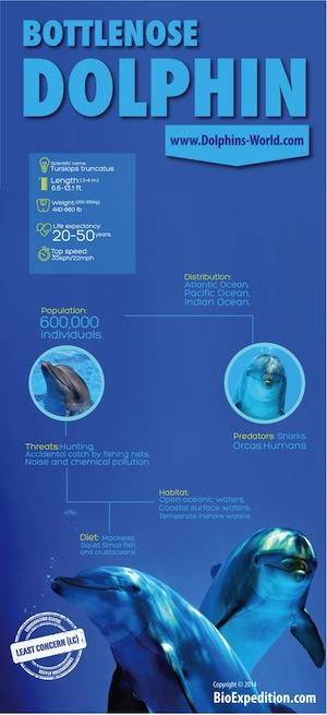 bottlenose-dolphin-300