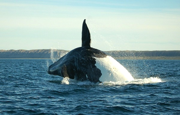 Whale species facts