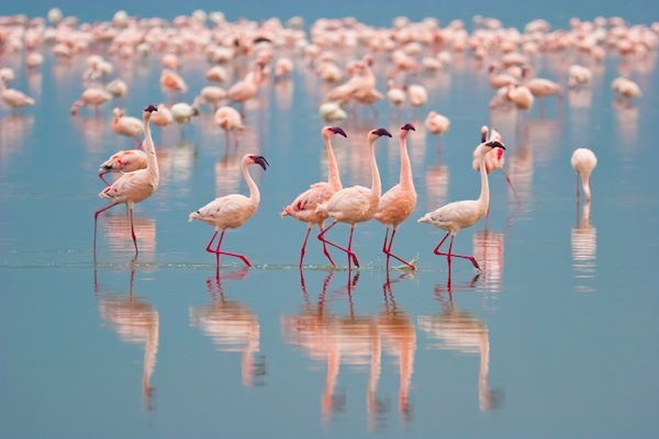 Flamingos habitat facts