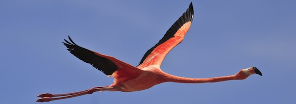 flamingo_feature