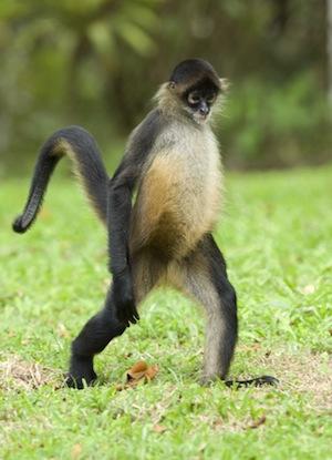 monkey classification