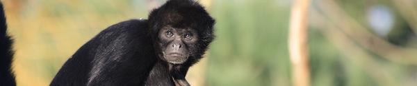 New world Monkeys information