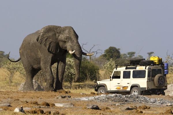 Elephant Anatomy Facts