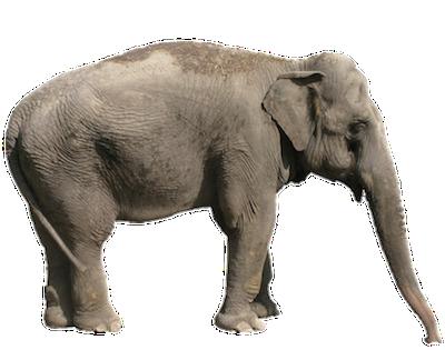 Elephants Information