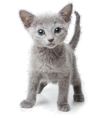 Feline_information