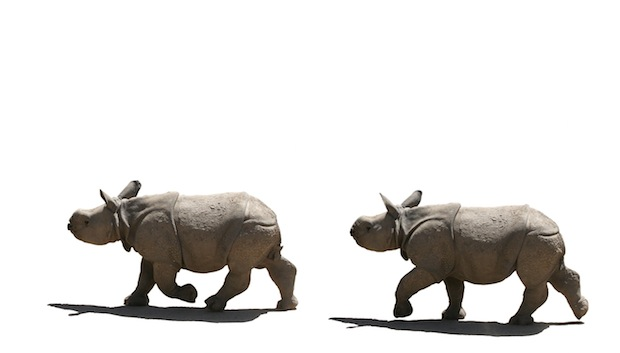 Greater one-horned rhinoceros Facts