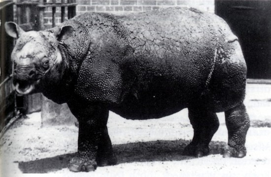 Rhinoceros Threats and Conservation