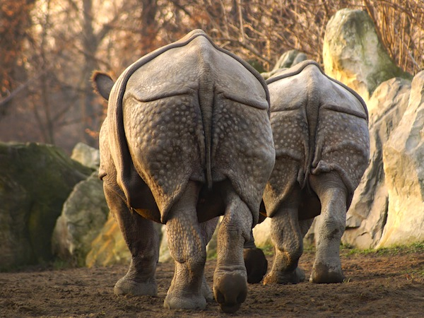 Skin of Rhinoceros