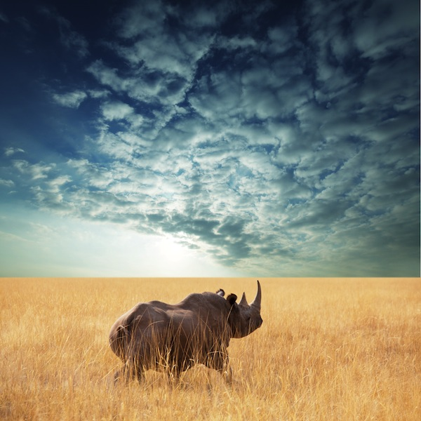 Rhino in beautiful landscape
